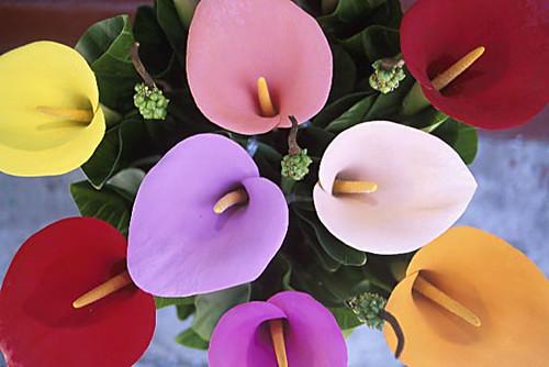 Calle colorate insieme di colori diana palman flickr for Calle colorate non fioriscono