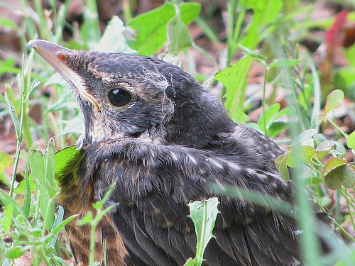 How does a baby bird know how to fly out of a nest? - Quora