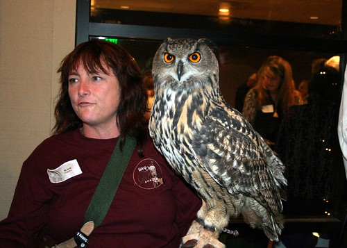Eurasian Eagle Owl These Owls Are The Largest In The