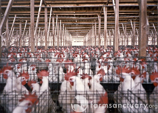 Battery Cages | by Farm Sanctuary