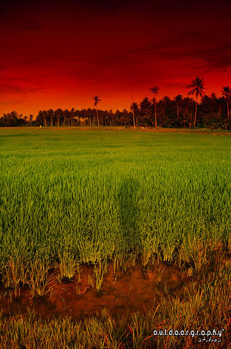 Surreal @ Paddy Field | by Sir Mart Outdoorgraphy™