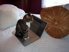 Blogging for Cats | by Vicki's Pics