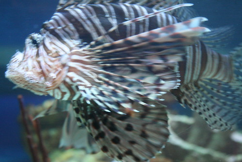 Image Result For Aquariums In North