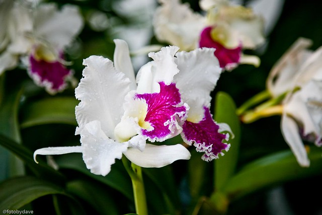 Orchid show orchid show at the missouri botanical - Orchid show missouri botanical garden ...