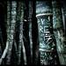 Bamboo Scrawls