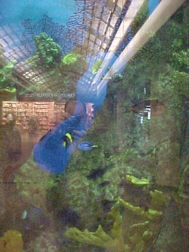 Image Result For Aquarium Orlando