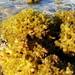 Coral Reef (چیز دریایی دو)