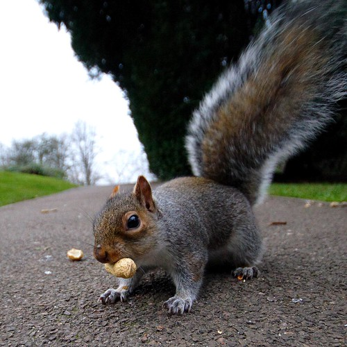 Nuts to Christmas | by *Firefox