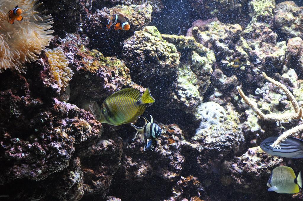 Wilmington Nc 211 Fort Fisher Aquarium M Fletcher Flickr
