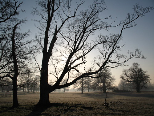 Misty Attingham Park trees | by Nigel Jones