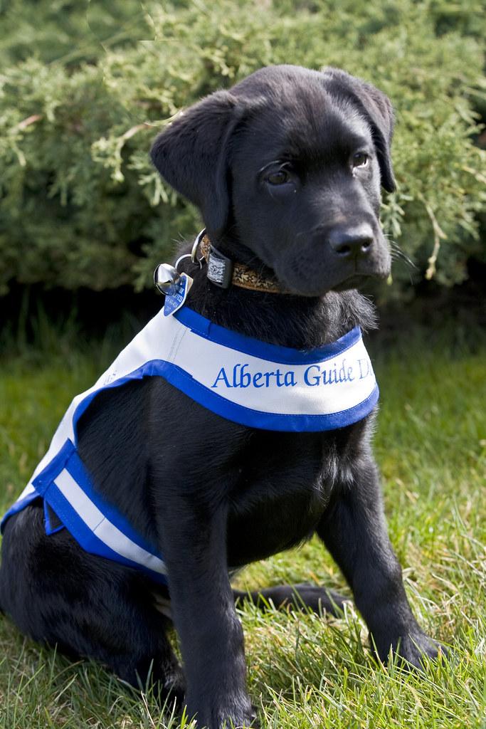 Dog Ed Training Collar Reviews