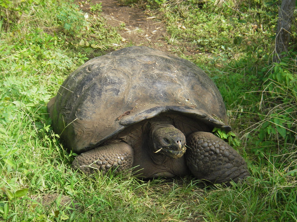 Image result for galapagos turtle