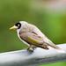 Soldier Bird