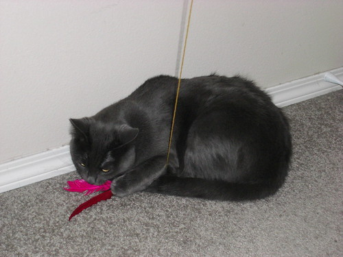 Cat Toy Wand With Dragonfly Wings Flutter