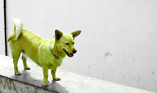 Green dog | by Ramón Peco