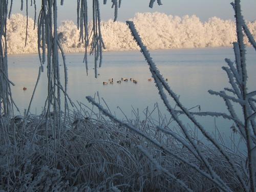 Hagestein winter dec 07 006 Piet Grasmayer Flickr
