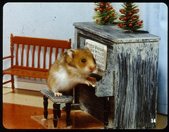 get down with a hamster christmas | by a nameless yeast