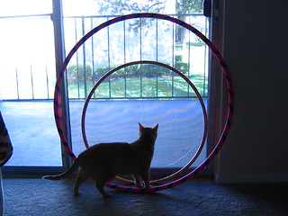 Hula Hoop Comparison | by Little Li