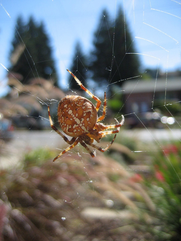 how to get rid of garden orb spiders