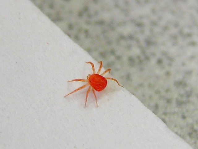Cat Ticks Dangerous To Humans
