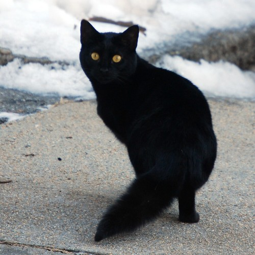The Blackest Of Cats There Are So Many Black Cats In The