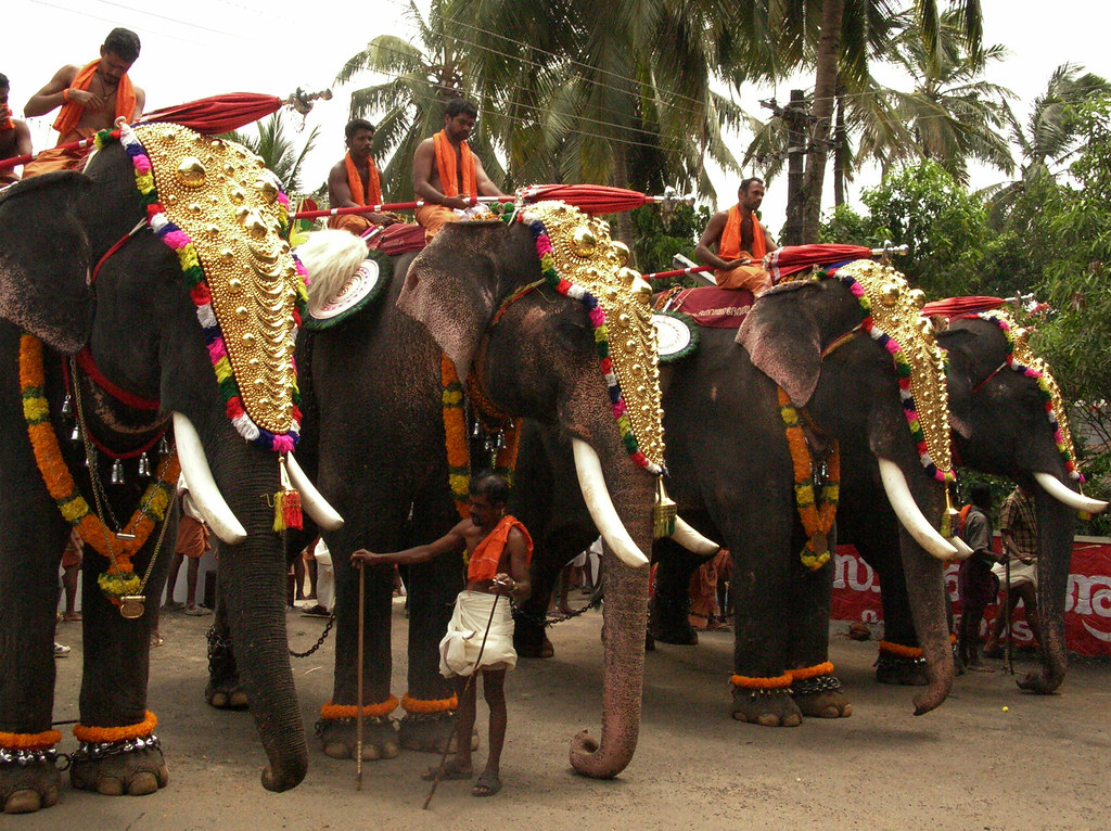 elephant, kerala, culture, elephant ride