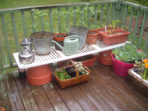 The start of the container garden. | by *darkly dreaming gardener*