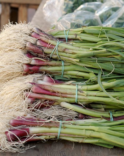 {163} green garlic, heart of the city market | by jen_maiser
