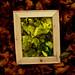 Framed Gold Green Leaves