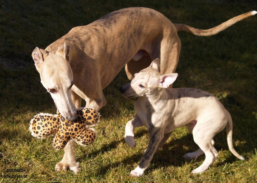 Loco und Coco, ach das ist ein ganz besonderes Foto für mich!!