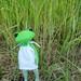 Fern the Wonderfrog