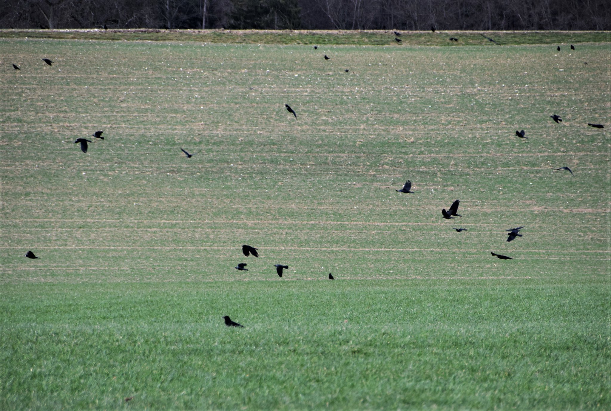 Crows 23.02 (7)