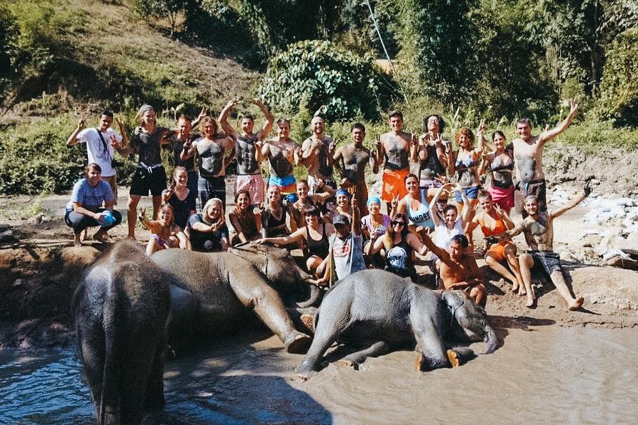 slonie_03