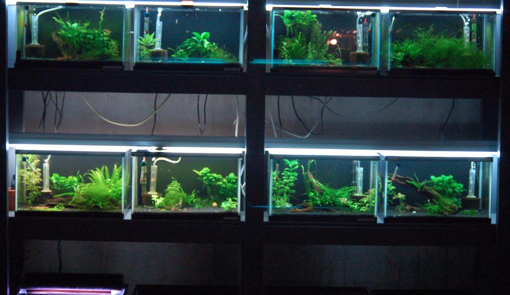 Fish Room Setup Ideas