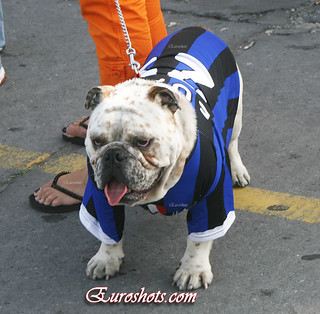 Inter Milan supporter on the Island of Lipari, suddenly develops Bulldog features | by Euroshots