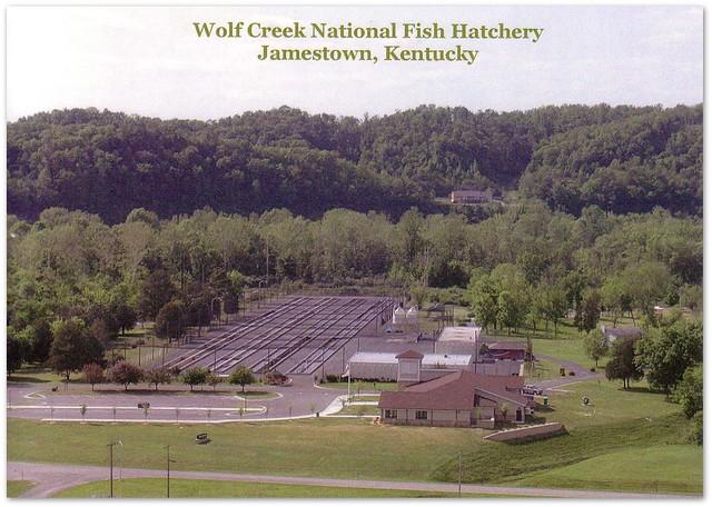 Wolf creek national fish hatchery postcard flickr for Fish hatchery ky