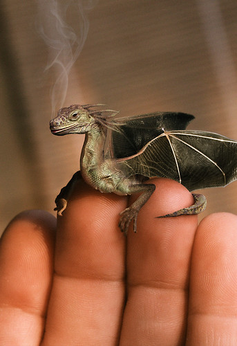 Baby dragon | by Nissk
