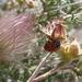 ladybug hiding
