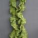 sea lettuce A
