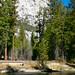 Sequoia & Kings Canyon N.P.