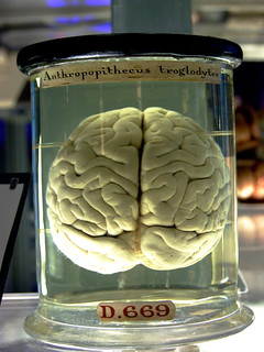 Chimp Brain in a jar | by Gaetan Lee