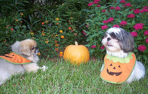 halloween_toby_gizmo | by claudinehellmuth