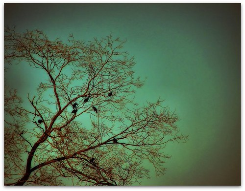 crow tree | by -Chad Johnson