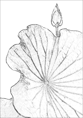 Lotus flower sketch imgp7491 by bahman farzad