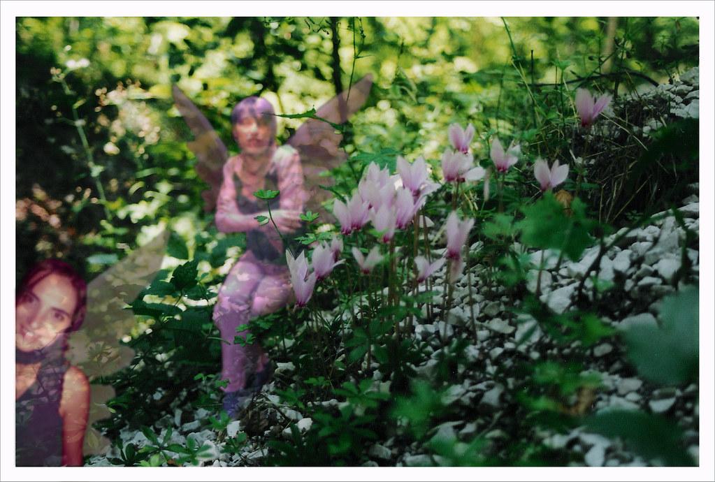 Magnolia incontri