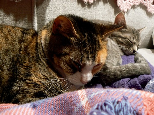Grace and Annika Snuggle | by Vicki's Pics