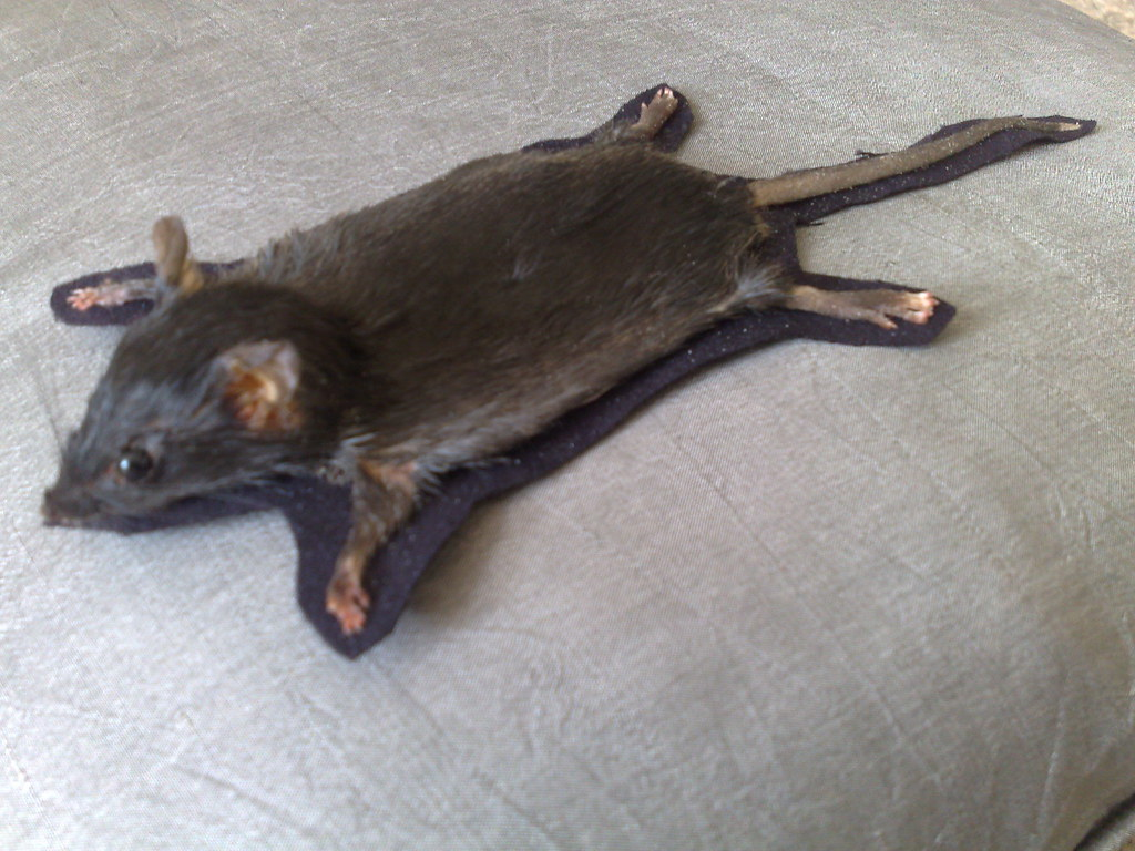 Taxidermy Mouse Rug .rodents_reborn | By Rodents_reborn U2026