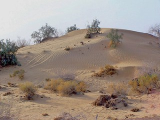 Cholistan Desert, Punjab, Pakistan - March 2008 | by SaffyH
