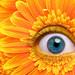 The Orange-Blue Eye