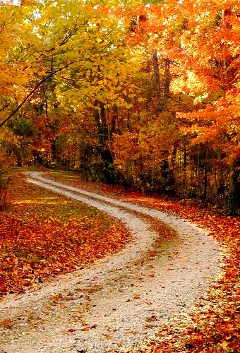 The winding road | by Amy V. Miller